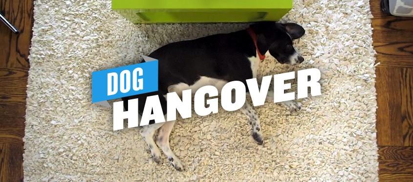 TWB Doggy Hangover