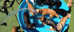Overhead shot of the pool at The Watering Bowl doggy daycare.
