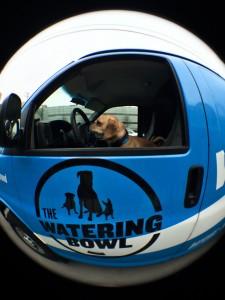 The Watering Bowl Waggin Wagon