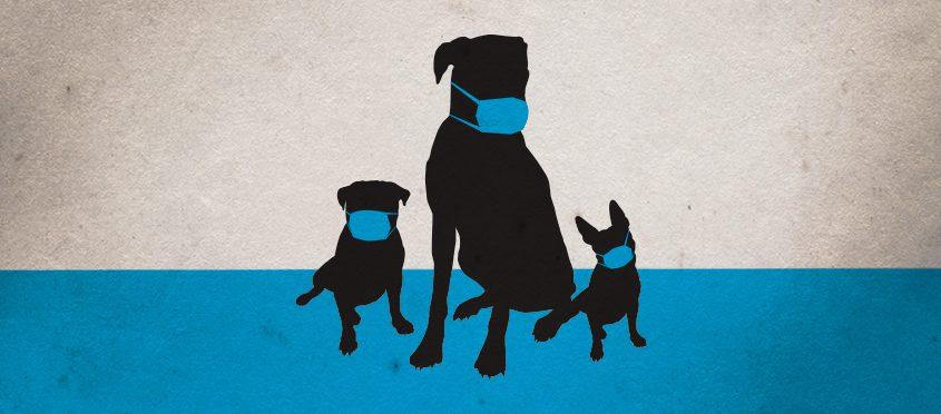 canine influenza education