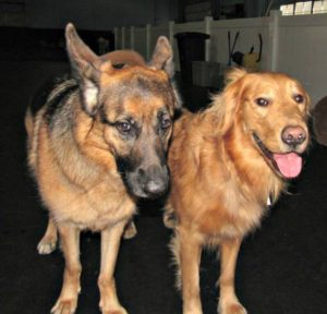 TWB dogs