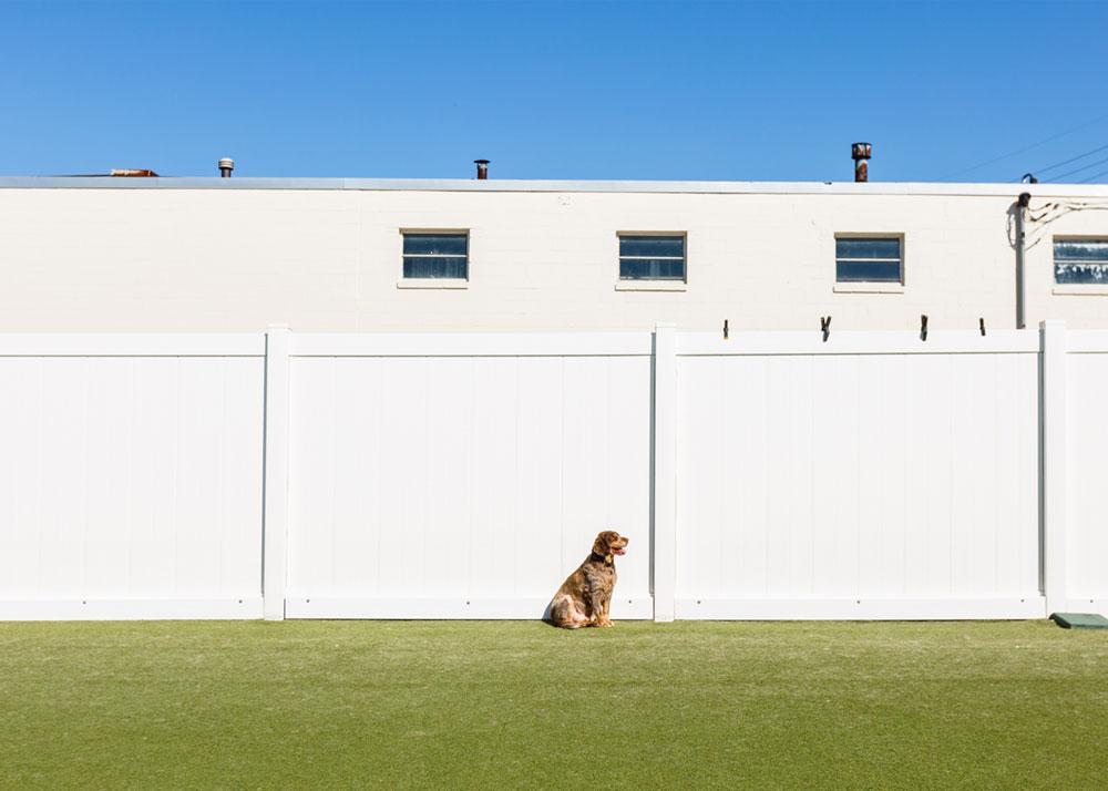 TWB-Brentwood-Location_Outside-Dog