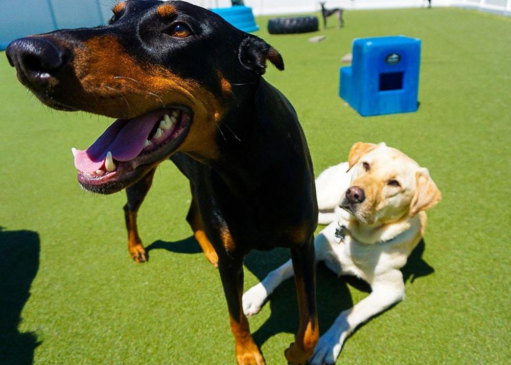 TWB-Dog-Grove-Location_Dog-Friends