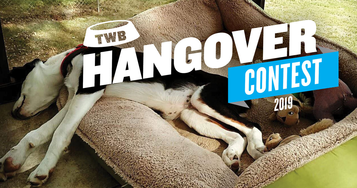 TWB-Hangover-Images_contest-feature-image