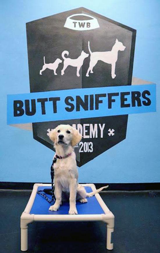 dog training puppy class graduation