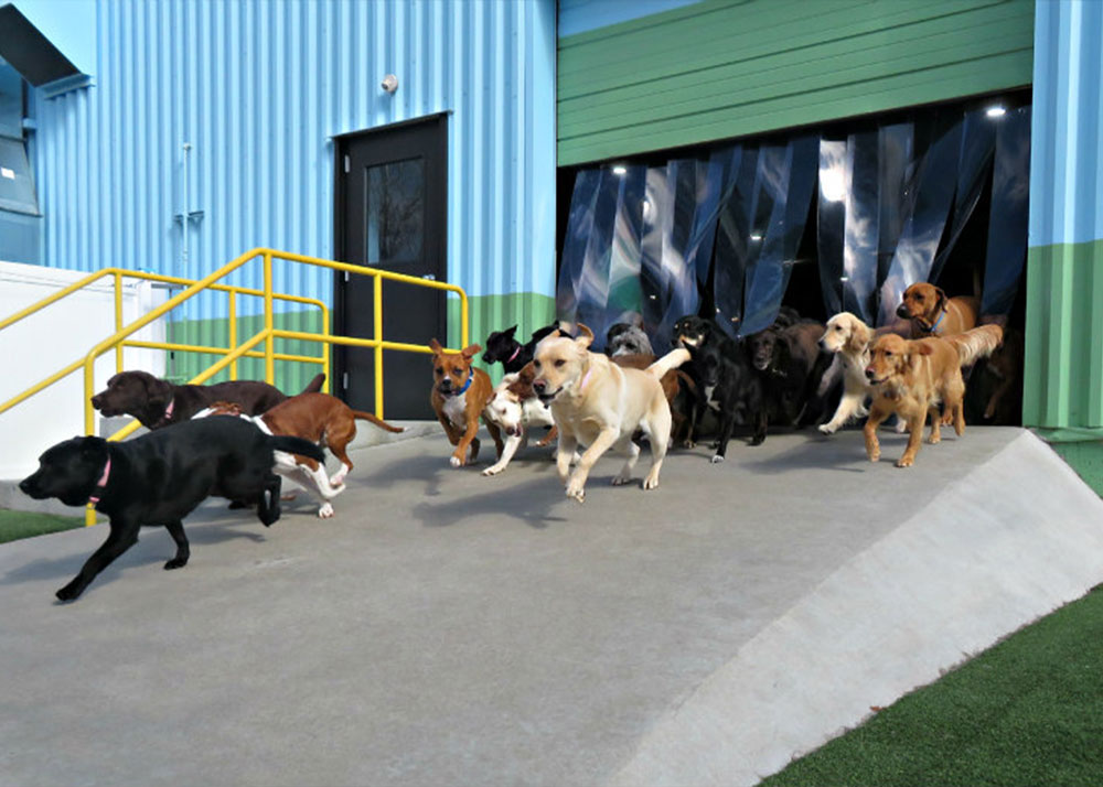 TWB-St-Peters-Location_Outdoors-Dogs-Running-out-Door