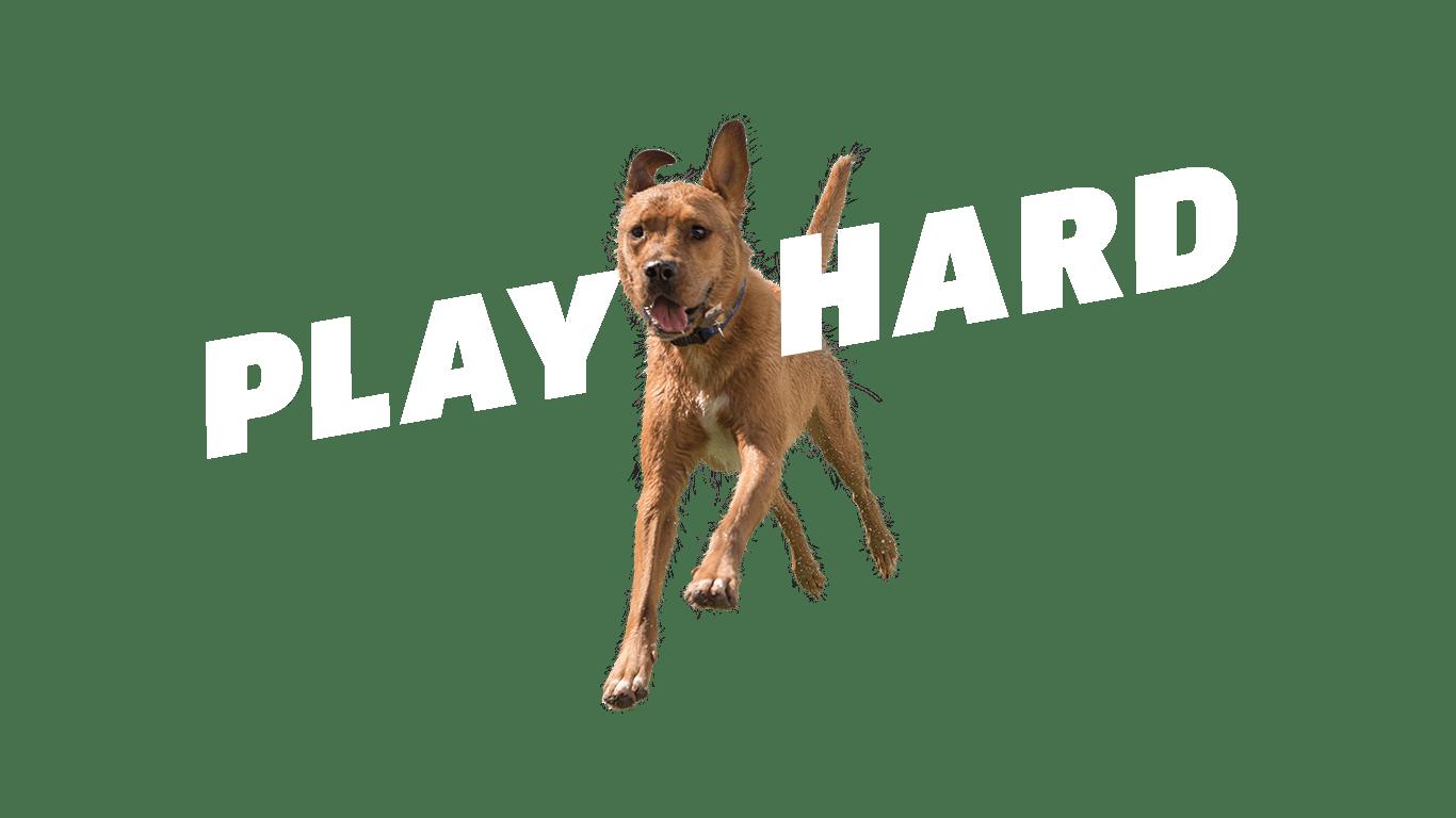 jumping dog cutout play hard
