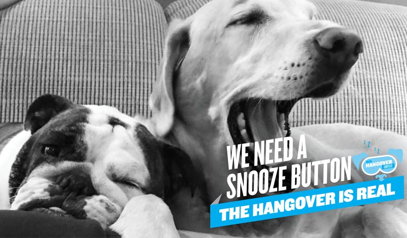 The Hangover Contest Tired Dogs Doggy Daycare