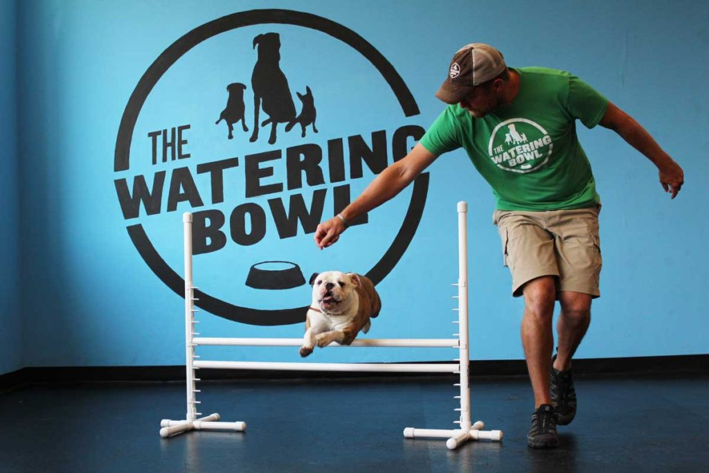The Watering Bowl Agility Training
