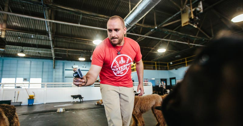 Daily Photos snapped by doggy daycare worker