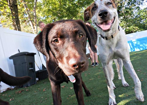 Outdoor Doggie Daycare St. Peters Missouri