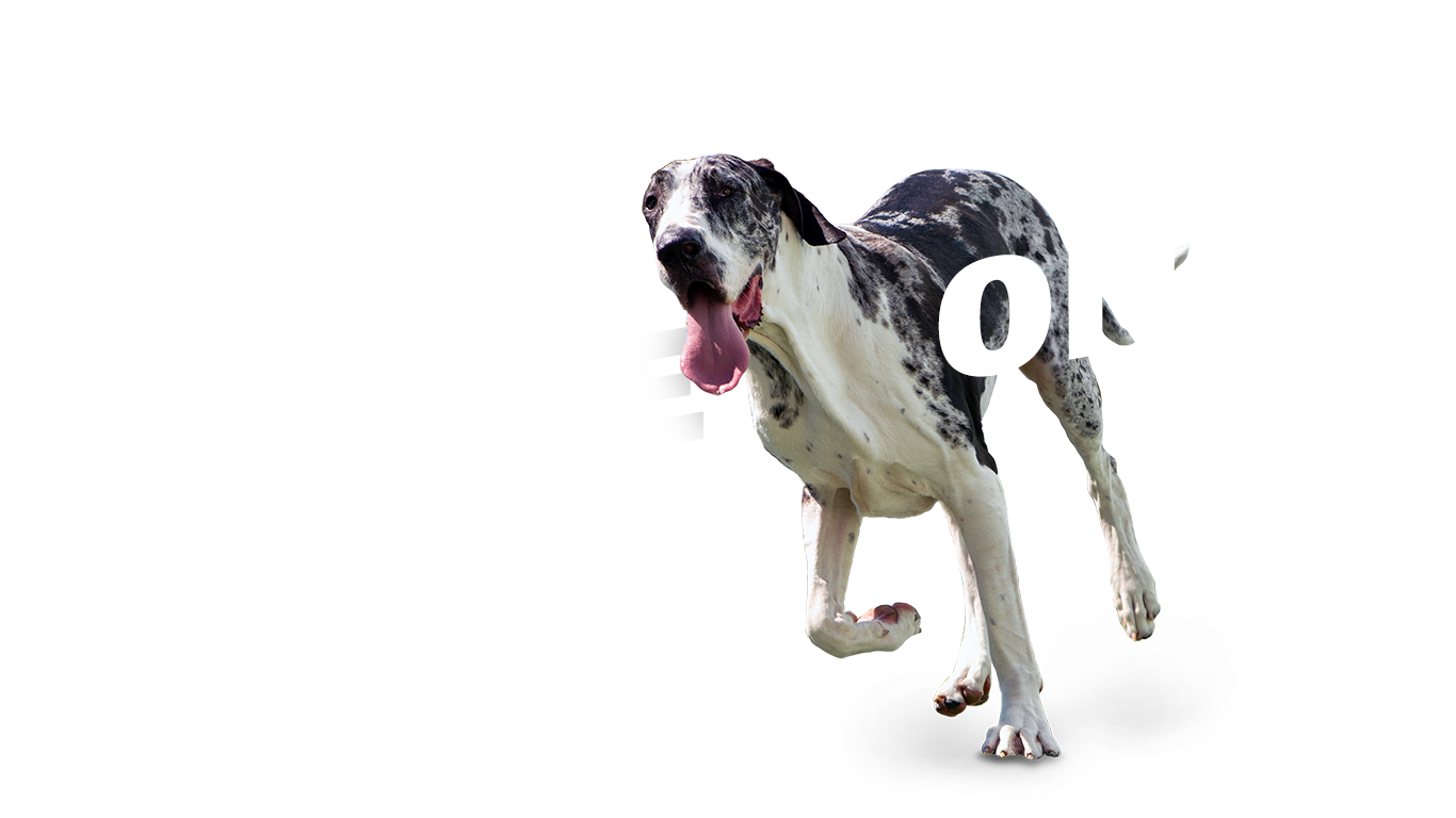 TWB-Come-On-Dog
