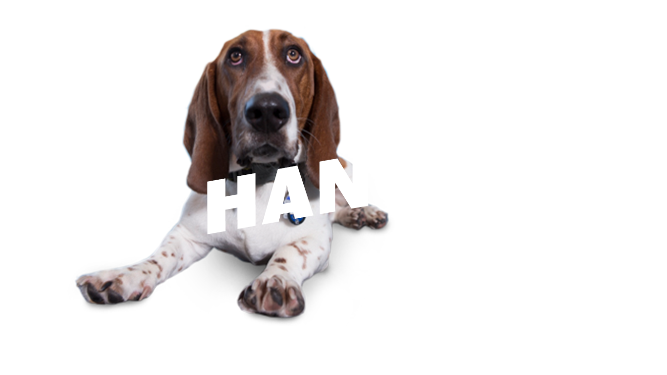TWB-The-Hangover-2